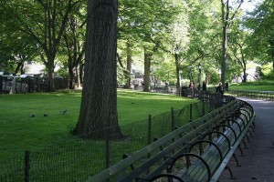 Spring walking tour in New York City