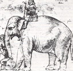Raphael's drawing of the Pope's elephant